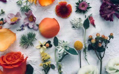 Prečo zvoliť prírodnú & bio konopnú kozmetiku Annabis